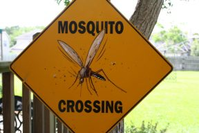 Mosquito Spraying in Moosic: